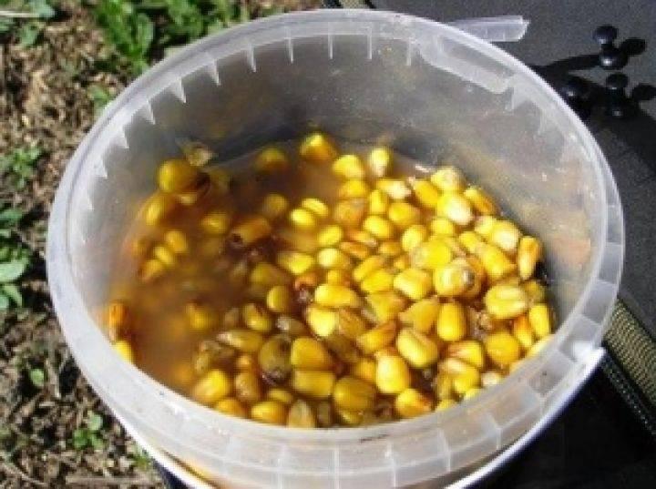 Ловля сазана на кукурузу: монтаж снасти, как ее варить для рыбалки, видео