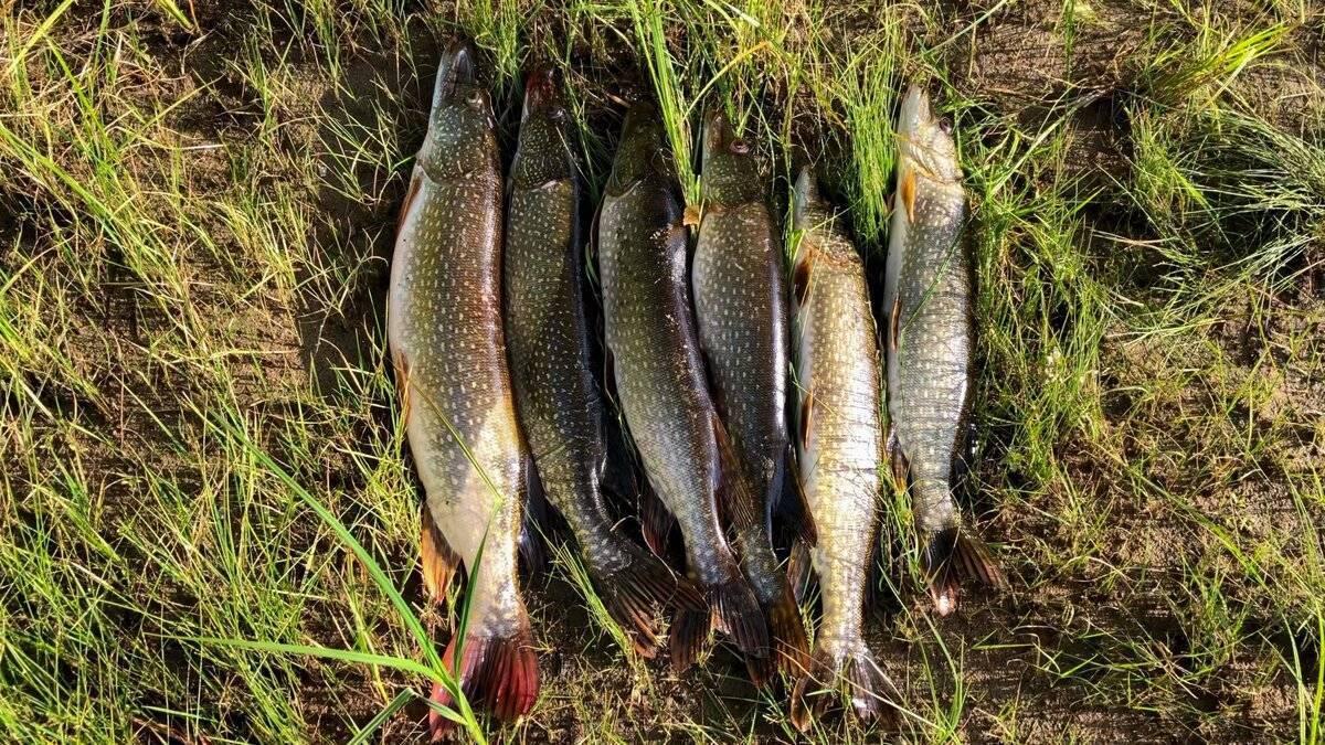 Чудесный улов рыбы и призвание первых учеников. мф. 4: 18-22; мк. 1: 16-20; лк. 5: 1-11