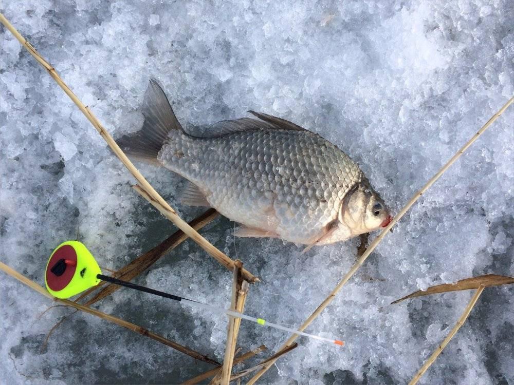 Зимняя ловля карася - тонкости и секреты - на рыбалке!