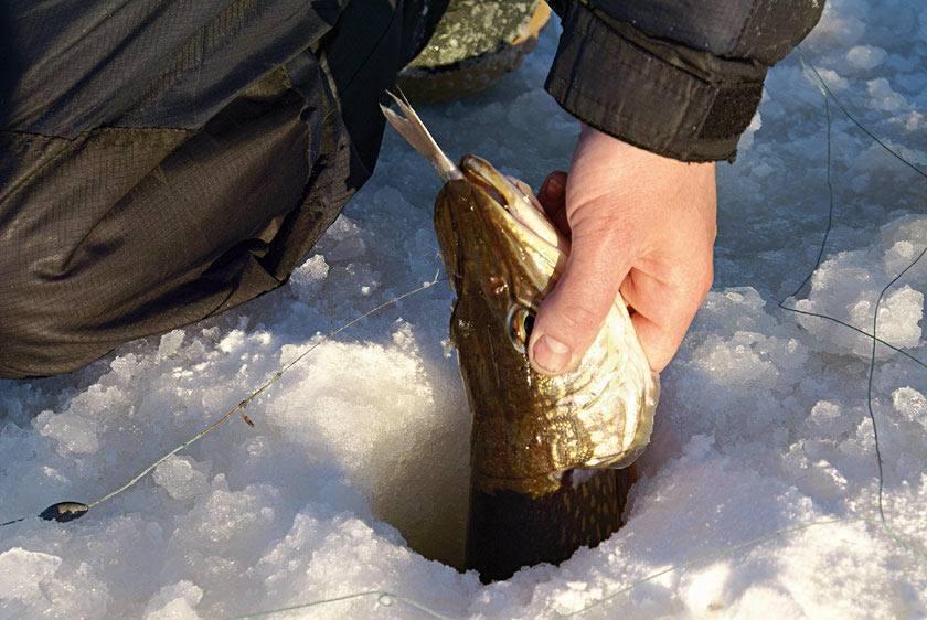 Рыбалка в феврале. кого и как ловить?