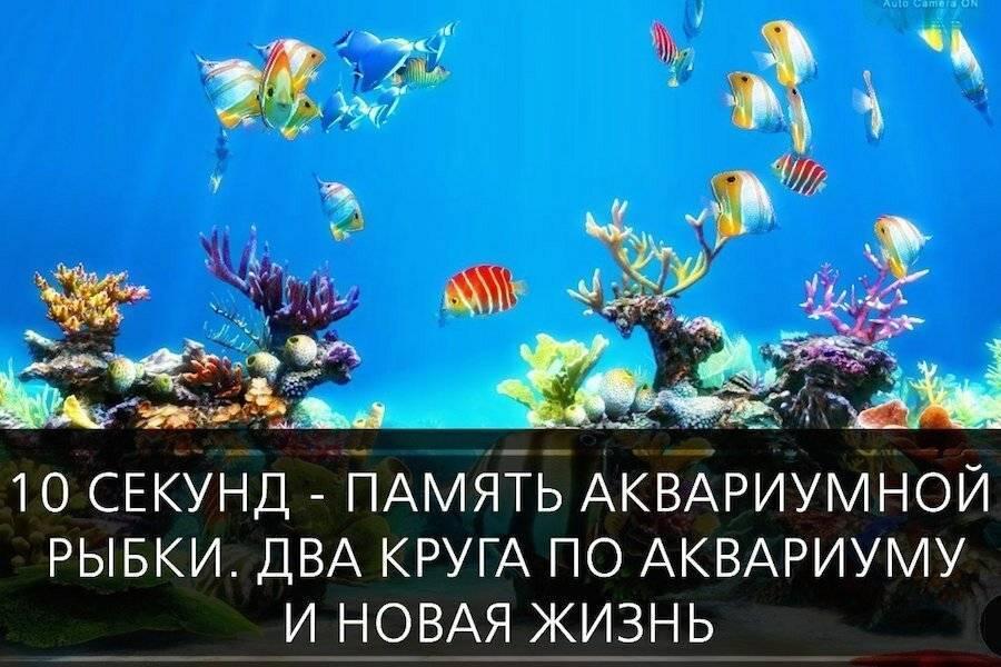 Какая память у рыбки, правда, что память рыбки 3 секунды