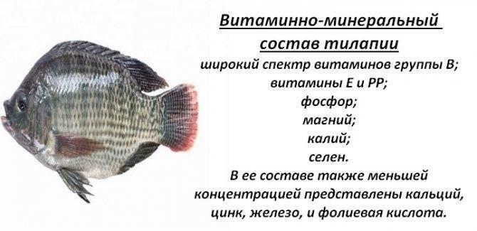 Чем полезна рыба, свойства и противопоказания