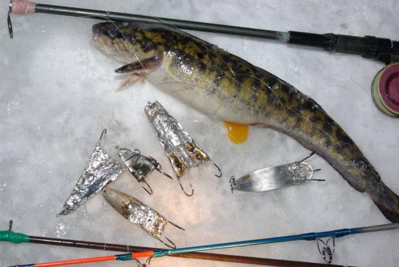 Как ловить налима зимой на стукалку - советы и видео