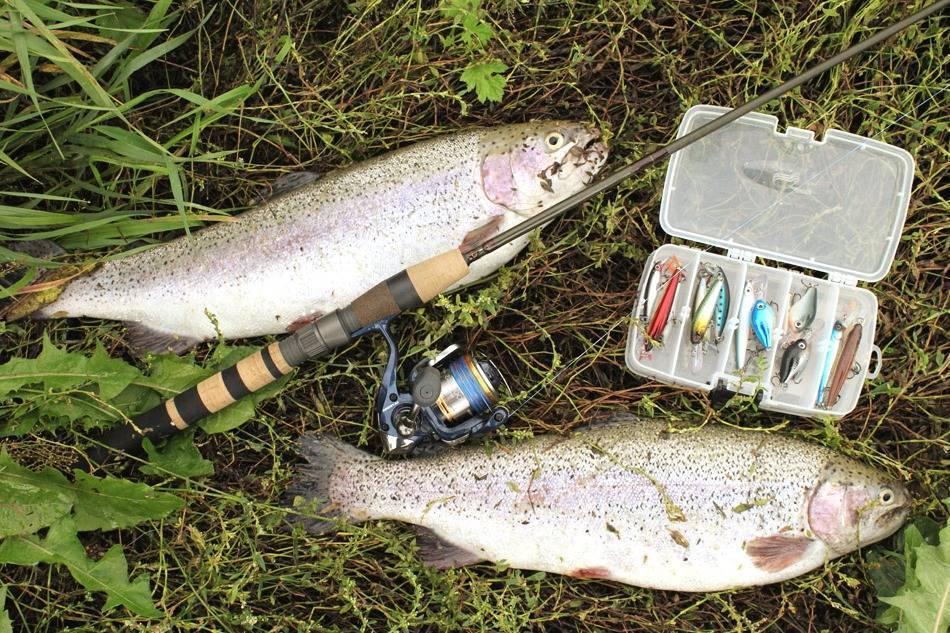 Удачно открыли рыболовный сезон нафорель
