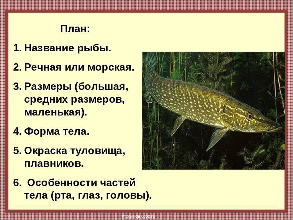 Болезни аквариумных рыбок: внешнии признаки и как лечить