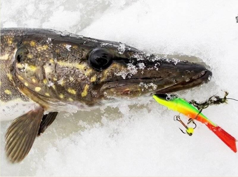 Балансиры на судака: выбор приманки и техника ловли зимой