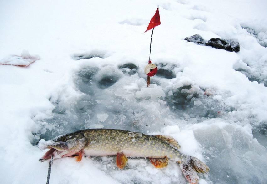Ловля щуки зимой со льда: где искать, как и на что ловить. подледный лов щук в зимнее время: декабрь, январь, февраль