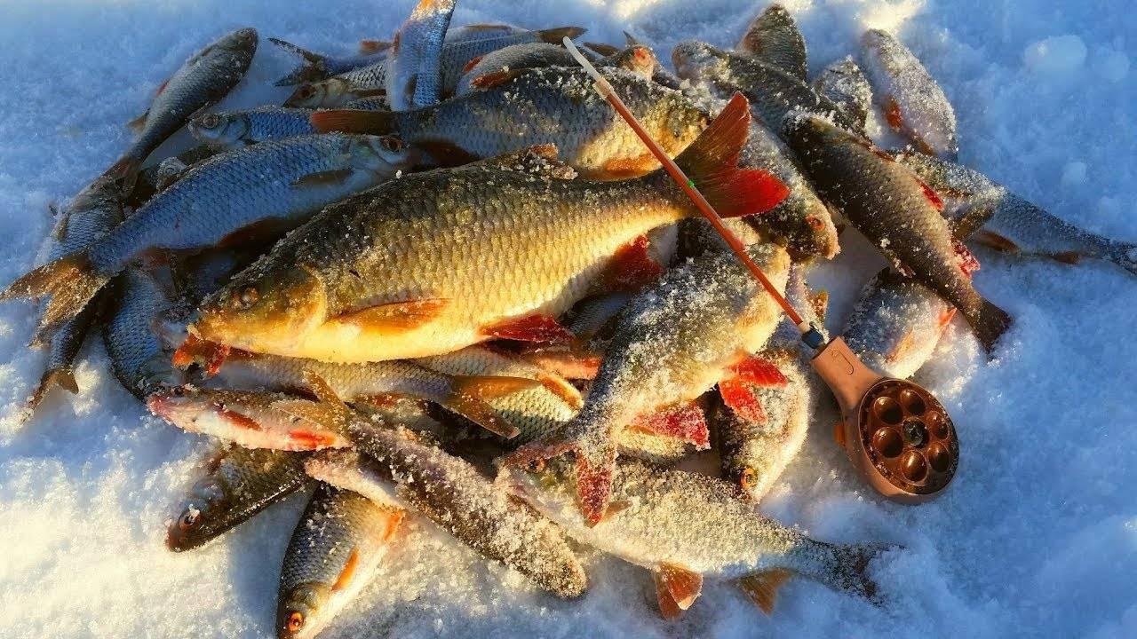 Видео про рыбалку