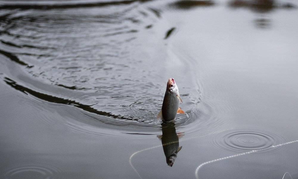 «мормышка и летняя поплавочная удочка». часть 1