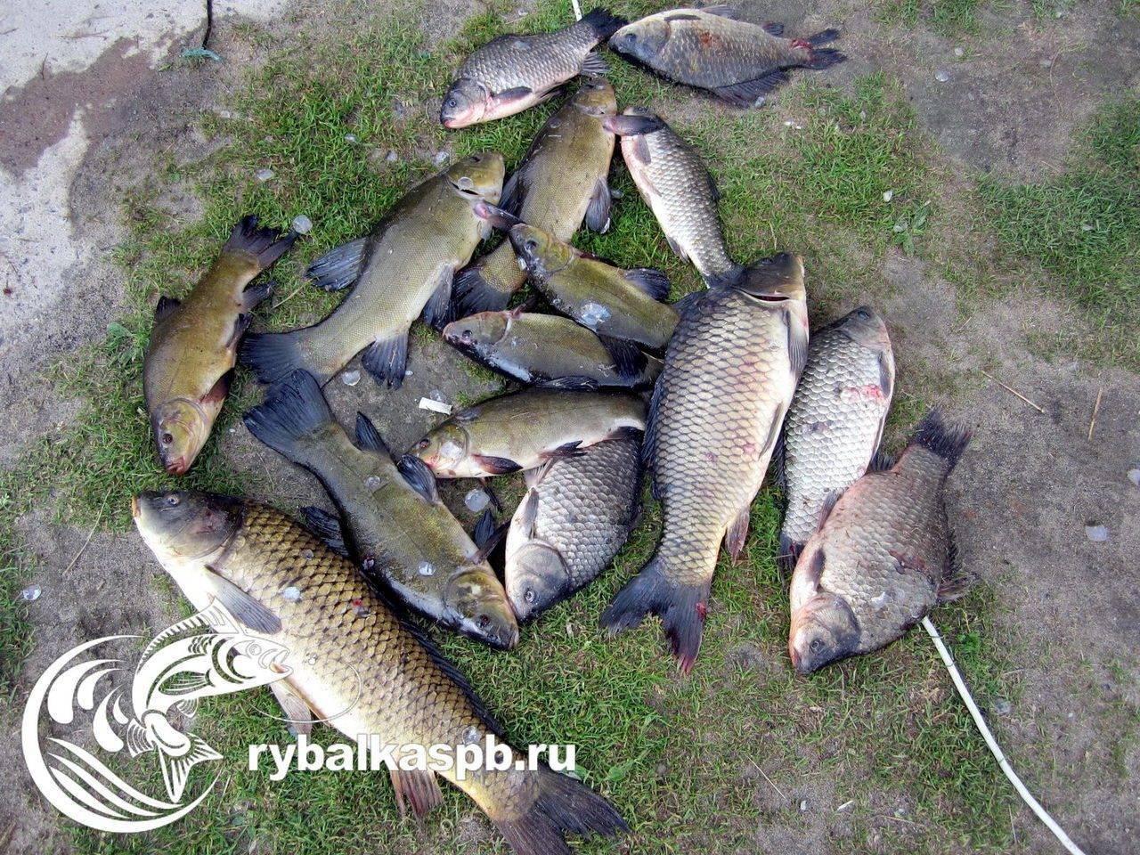 Раково платная рыбалка официальный сайт