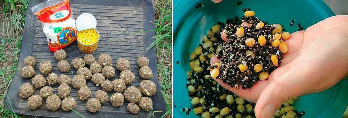 Прикормка для сазана: как приготовить своими руками в домашних условиях, рецепты для кормушек, как прикормить на течении, какой запах любит карп