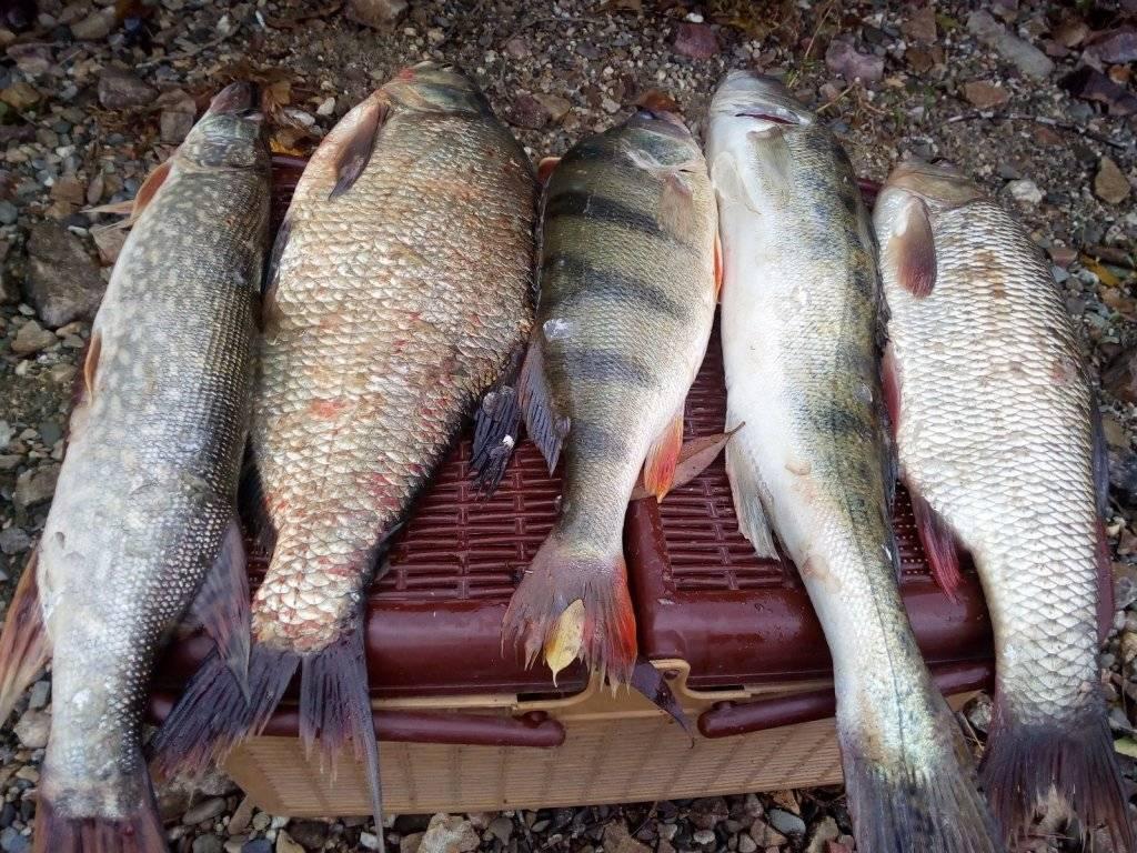 Рыбалка в вологодской области | ловля на реках и озёрах