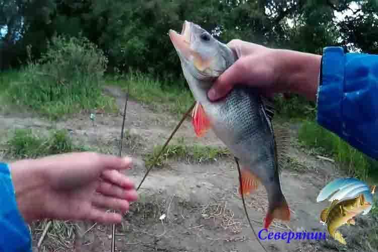Бокоплавы для зимней рыбалки