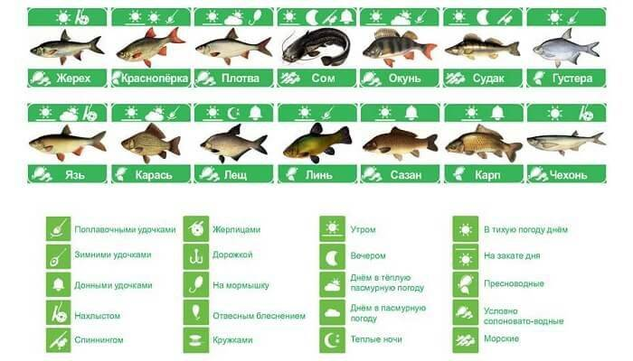 Тонкости ловли окуня в ноябре - на рыбалке!