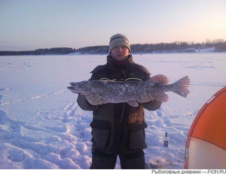 Рыбалка на можайском водохранилище: какие есть рыболовные базы, особенности ловли зимой