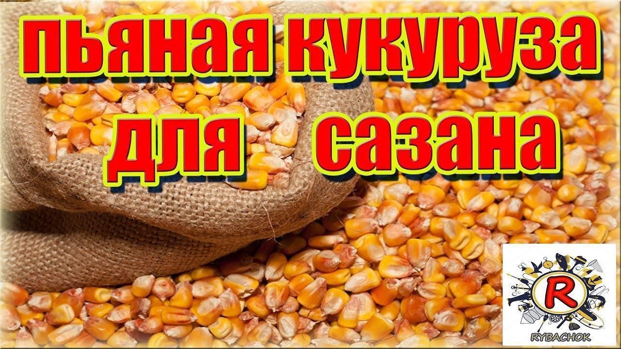 Кукуруза в качестве насадки и прикормки для карповой ловли