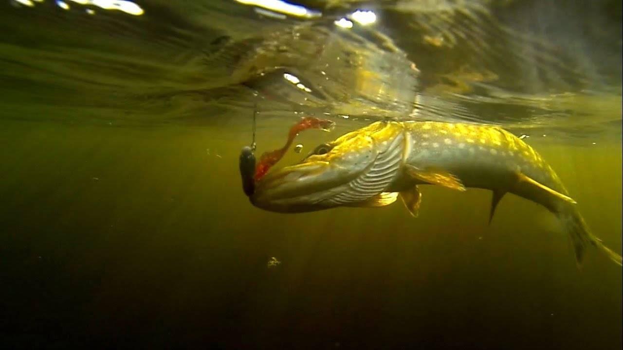 Осенняя глубинная ловля с поплавком