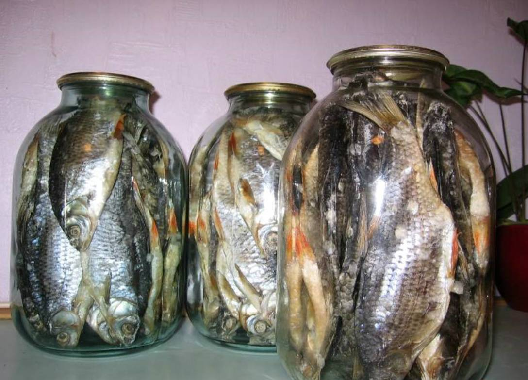 Как распорядиться уловом в «рыбный день»? холодная сушка рыбы – как правильно вялить по госту