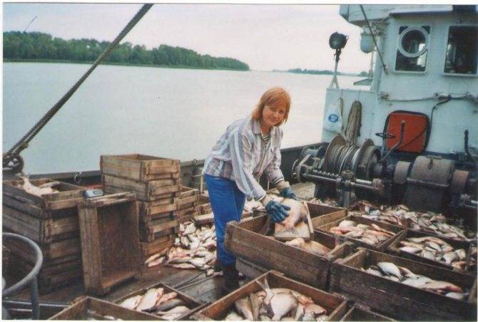 Все, что нужно знать о рыбалке осенью