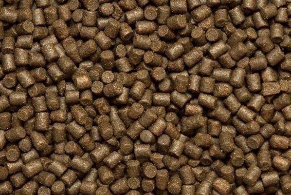 Корм для форели: чем питается, изготовления пеллетс и как пользоваться