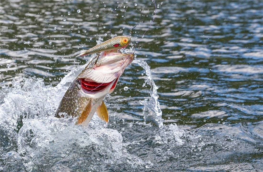 Как зарабатывать на продаже рыбы
