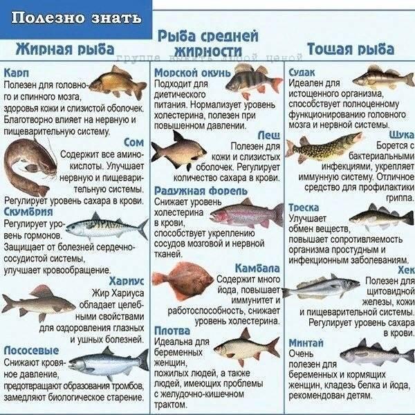 Бывает ли рыба без костей, или что делать ленивым любителям рыбки