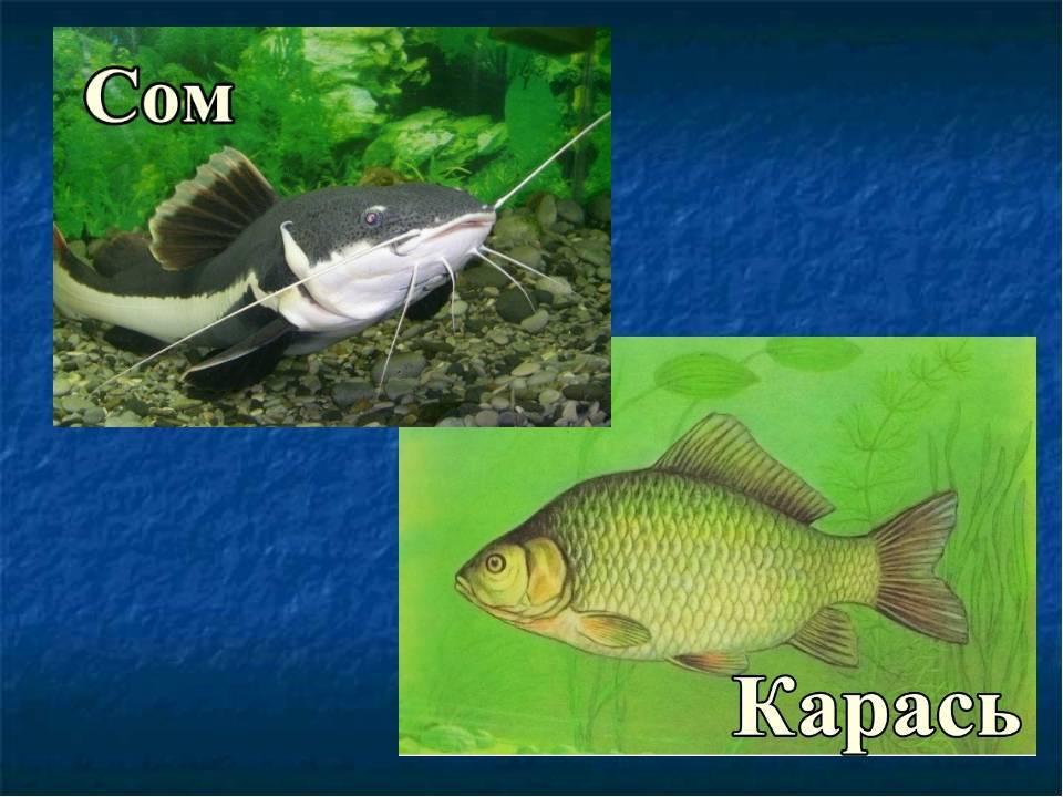 Глава 1. рыбы и среда их обитания