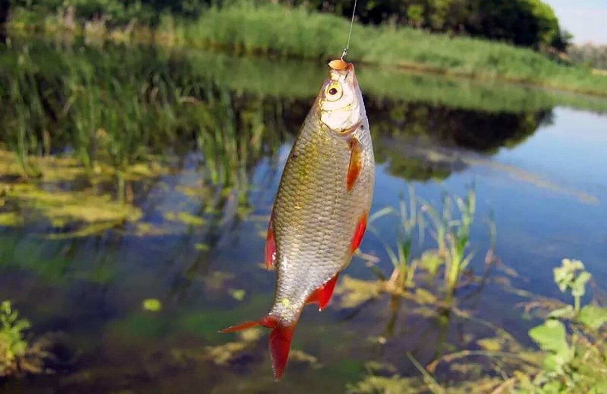 «мормышка и летняя поплавочная удочка». часть 1 - спортивное рыболовство