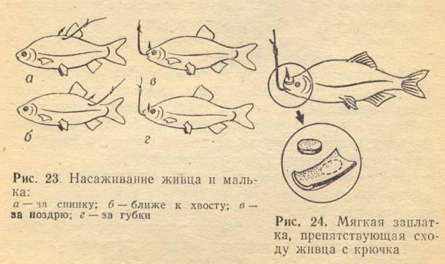 Как хранить червей для рыбалки – основные способы и советы