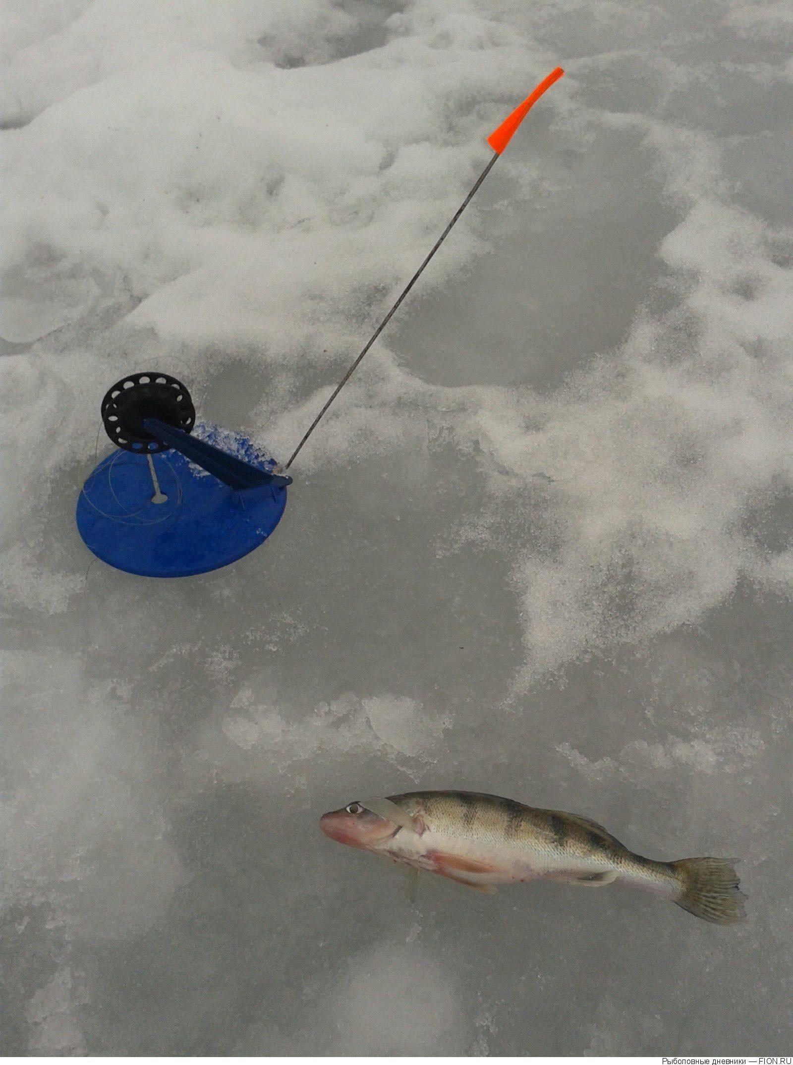 Ловля судака на жерлицы зимой: рыбалка на тюльку, видео, оснастка, и как правильно сделать снасть?