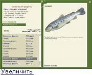 Что за рыба белая форель