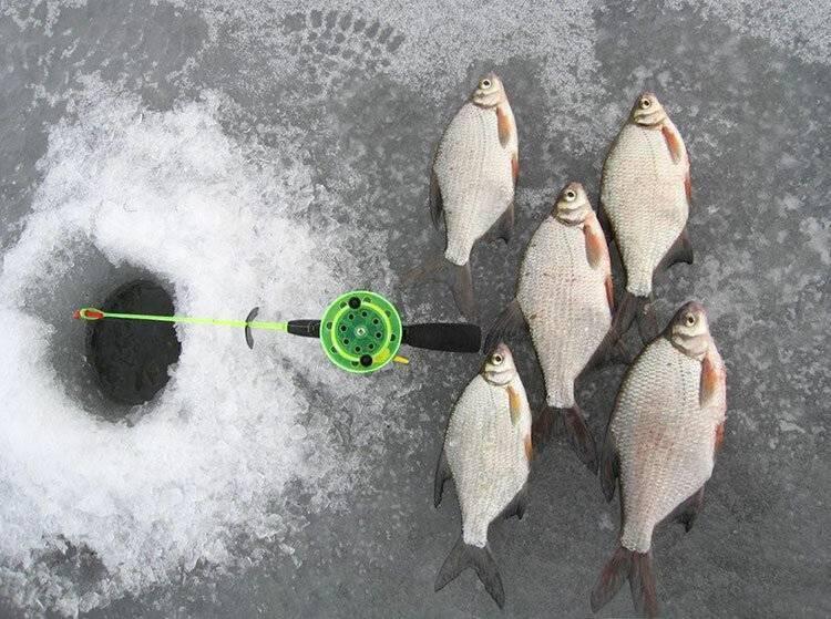Ловля густеры в июле - читайте на сatcher.fish