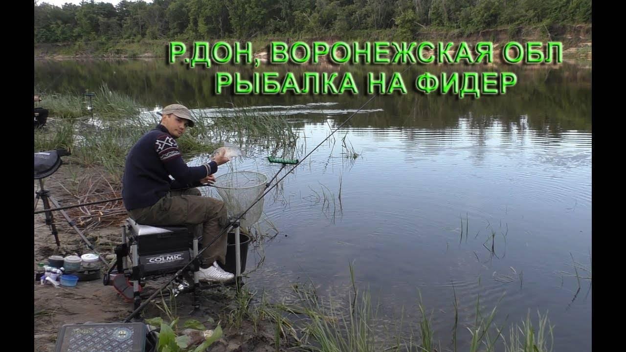 Какая рыба щука фото, где ловить щуку в воронеже на спиннинг видео