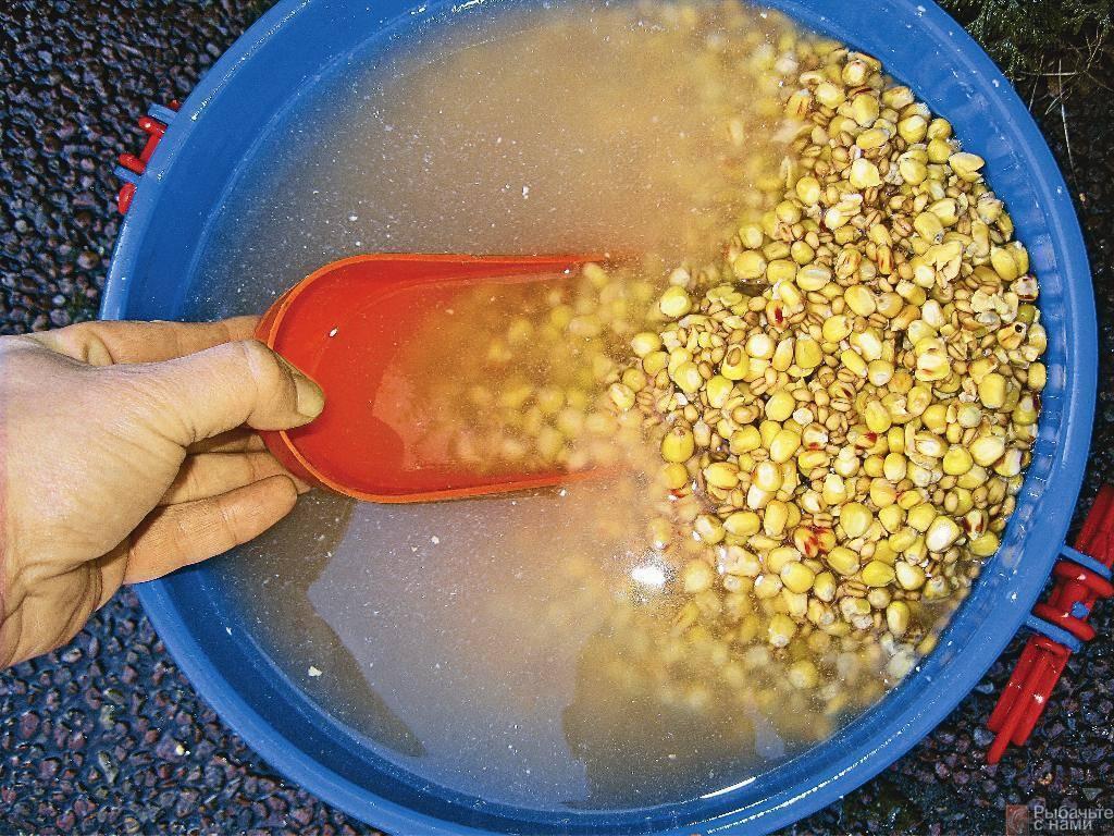 Как запарить пшеницу для рыбалки: в термосе, ловля на пшеницу