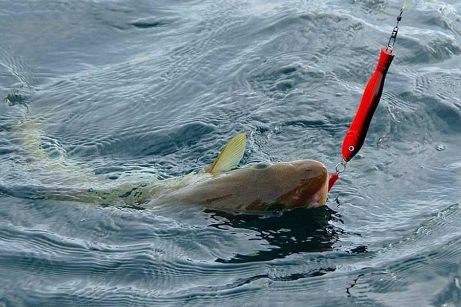 Рыбалка на черном море: как ловить с лодки и берега, виды рыб, тактика