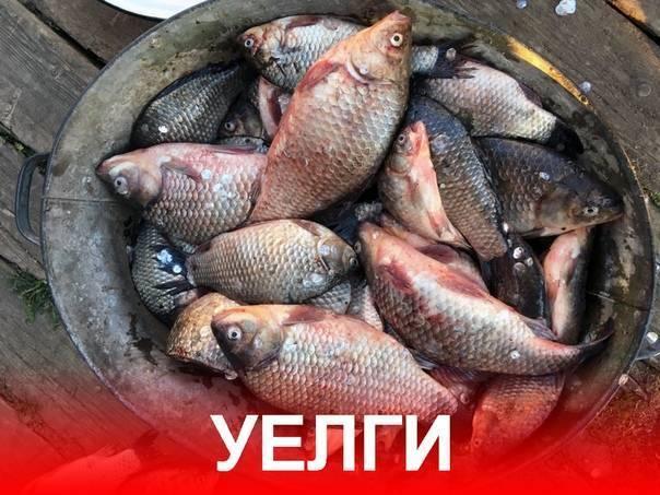 Озера и реки в челябинской области для рыбалки: лучшие места
