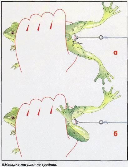 Секреты ловли щуки на лягушку: снасть, приманки, тактика - vobler club - клуб любителей рыбалки