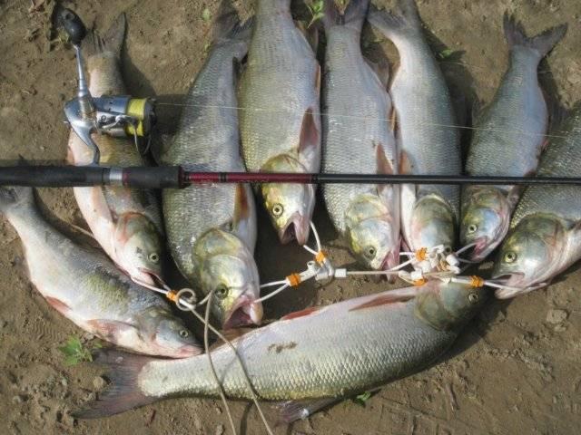 Ловля судака осенью: подбираем снасти в сентябре октябре и ноябре