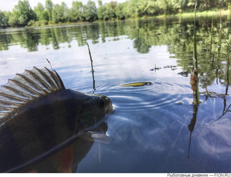Рыбалка вбрянске и области