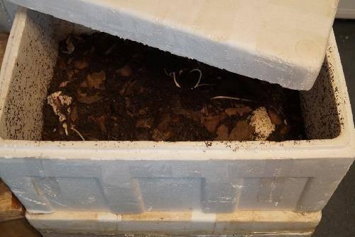 Как сохранить червей для рыбалки в домашних условиях