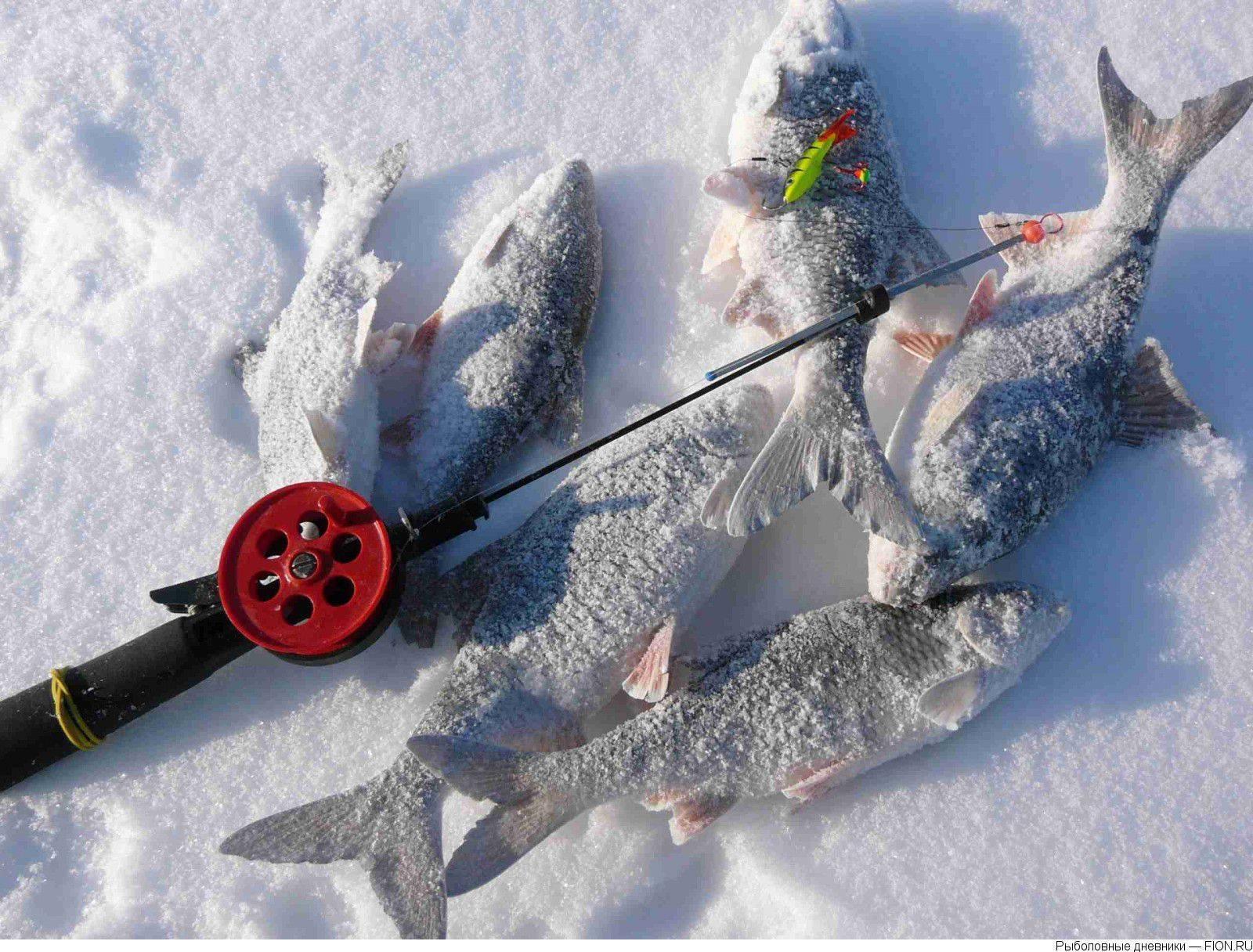 Зимняя рыбалка на щуку на балансир: техника и тактика ловли