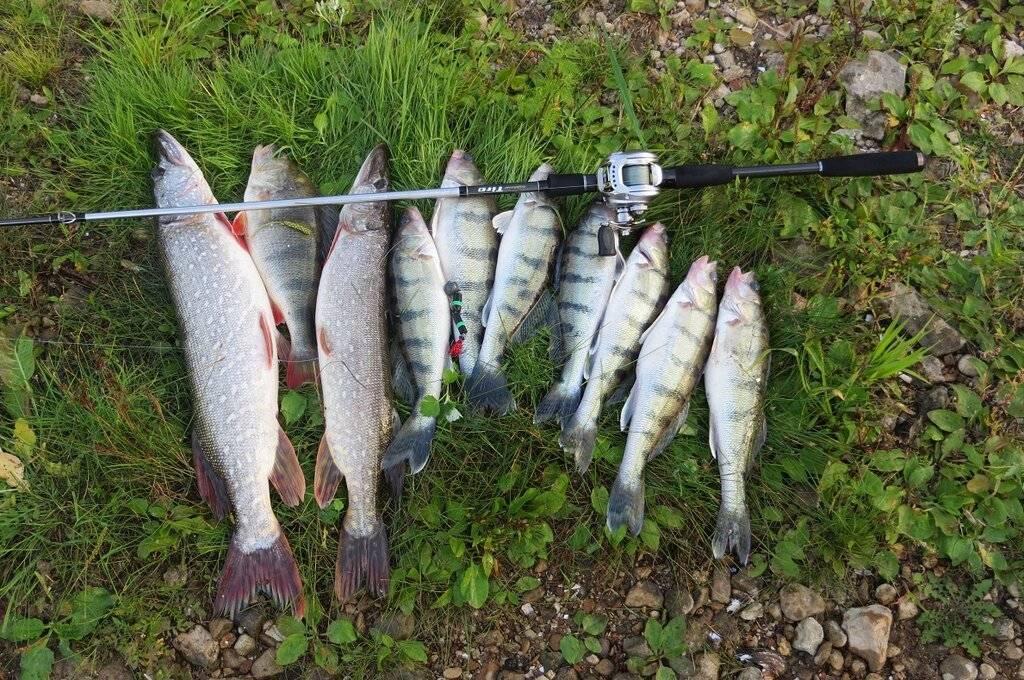 Рыбалка на оке под серпуховым: места и особенности