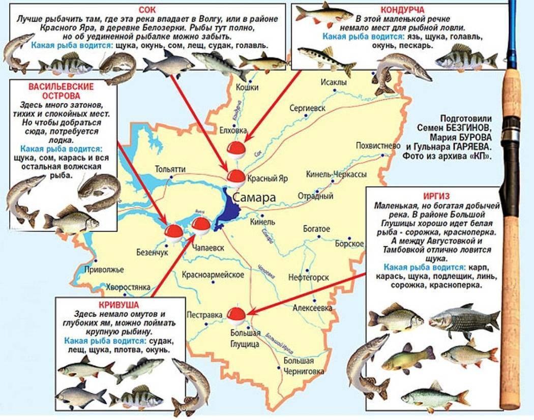 Рыбалка в самаре и самарской области: основные места ловли