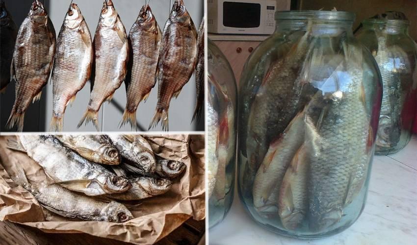 Сушеная рыба: как и сколько солить рыбу перед сушкой