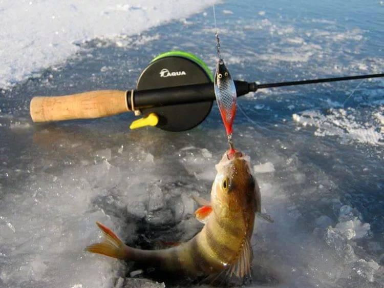 Ловля окуня зимой на блесну: правильный выбор места и приманки