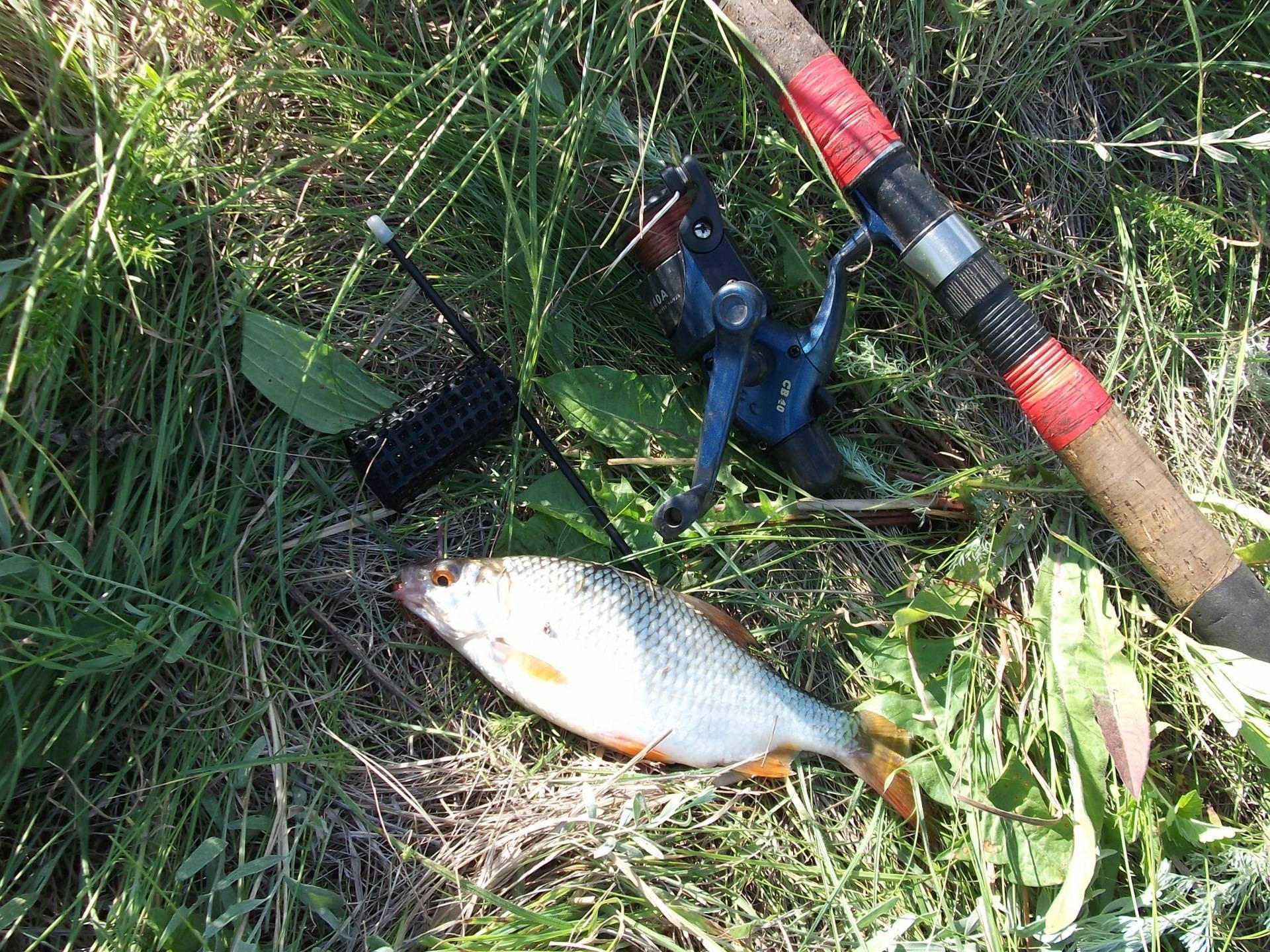 Ловля подуста – рыбалке.нет