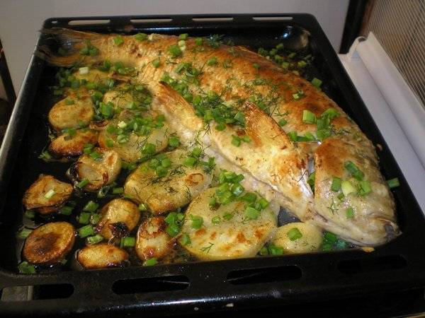 Блюда из косули: подготовка мяса, выбор специй, особенности приготовления, примеры простых рецептов, фото