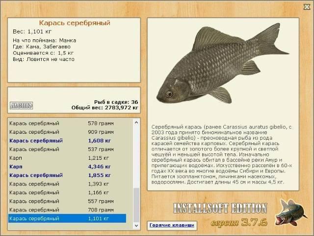 Золотой карась и серебряный карась: (как выглядит рыба и чем питается)