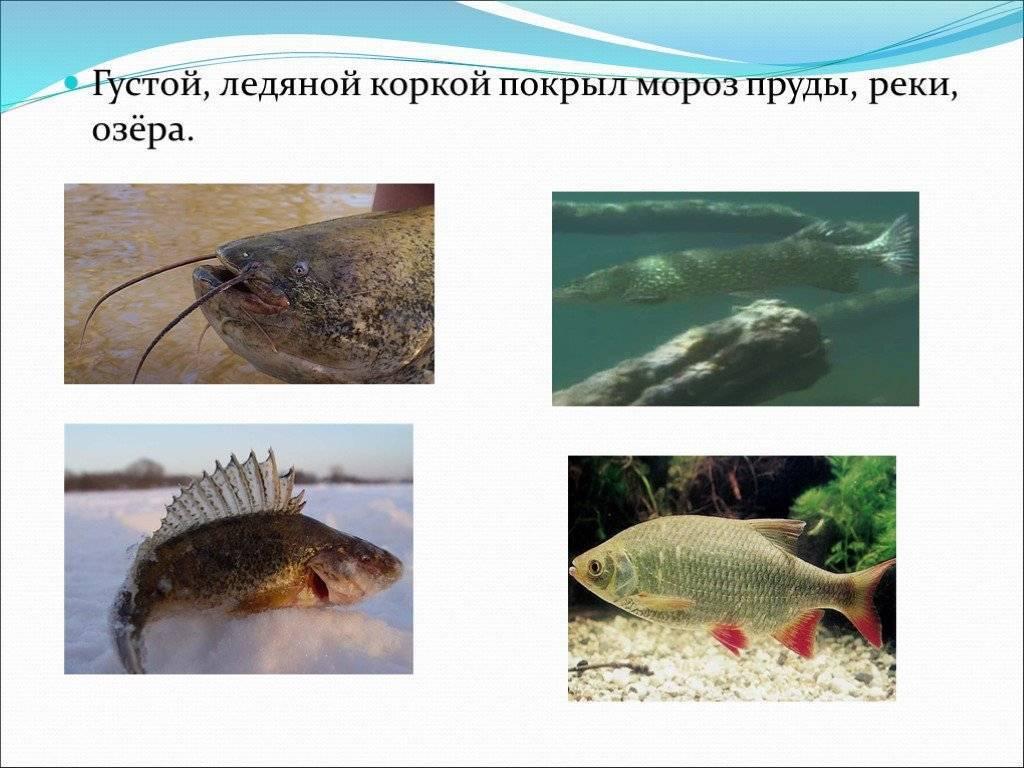 Как ловить зимой рыбу: выбор удочек, снасти, лучшие приманки, особенности и техника ловли, советы рыбаков - handskill.ru