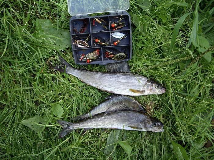Рыбалка на телецком озере на что ловить